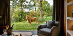 safari lodge lions zoo de la fleche